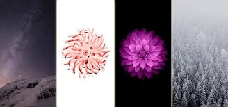 flower wall paper download download all 15 wallpapers from ios 8 right now ios iphone