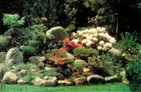 Rock Garden Design Ideas Enchanting JARS V48n48 Rhododendrons And Scandinavian Design