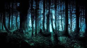 2560 X 1440 Dark Forest Wallpapers ...