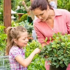 best plants for a fairy garden fairy