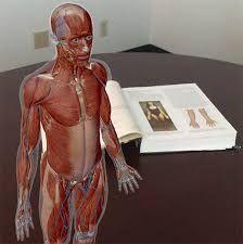 For instance, the proteins synthesized in the every system in the body has organs that produce the necessary functions for life. Anatomy And Physiology Anatomical Position And Directional Terms