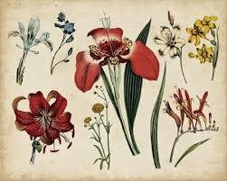 Botanical Chart Print Antique Botanical Chart Ii