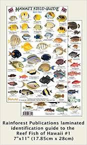 Oahu Fish Chart Hawaii Reef Fish 1 Identification Guide Laminated Single