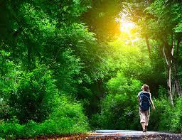 walking nature 150629