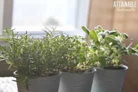 indoor herb garden oregano thyme