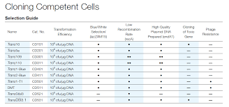 Cloning Competent Cells Civic Bioscience