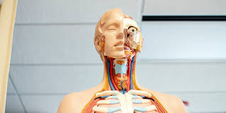 Leave a reply cancel reply. Introduction To Anatomy Physiology Bundle Stacksocial
