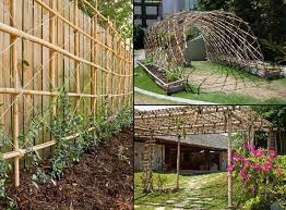 Small Picture 16 best Bamboo images on Pinterest Bamboo garden Gardening and