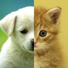 dogs and cats wallpaper. Perfect Wallpaper Cats U0026 Dogs Wallpapers HD  Cute Puppies Kittens On And Wallpaper A