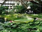 Ботанические сады россии фото