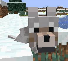 baby wolf minecraft. Brilliant Minecraft This Cute Baby Wolf From Minecraft Is Cute You Get A If You  Have 2 Tamed Wolves To Feed Them Any Kind Of Meat Or Bones  For Baby Wolf