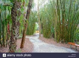 bamboo groves mckee botanical garden vero beach florida