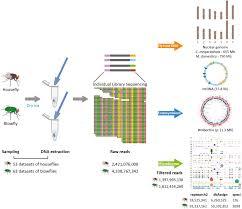 Bacteria And Viruses Venn Diagram The Microbiomes Of Blowflies And Houseflies As Bacterial
