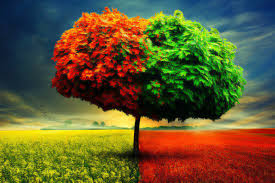 Color Changing Wallpaper 66bb22 Color Wallpapers Seasons Nature Grass Colors Change Autumn