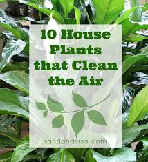 10 houseplants that clean the air