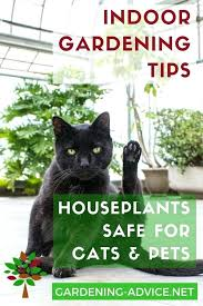 house plants safe for cats which house plants are safe for cats gardening houseplants indoor plants house plants safe for cats