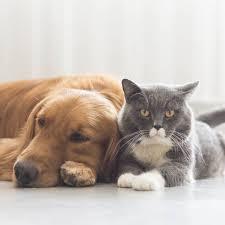 Haustiere Sind Für Klimawandel Mitverantwortlich Brigittede