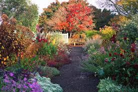 a riot of colours can give gardens a casual wild feel lambley garden in
