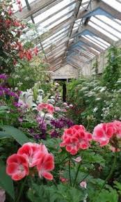 Small Picture Alstroemeria Ben Gardens