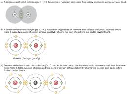 what atoms can form hydrogen bonds 2 2 chemical bonds anatomy and physiology