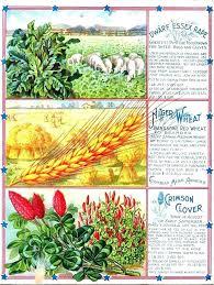garden catalogs best gardening catalogs best garden catalogs vintage seed catalog garden catalogs best garden catalogs