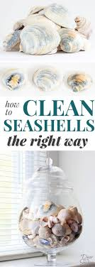 Do you know how to clean seashells the RIGHT way? Yes, there is a