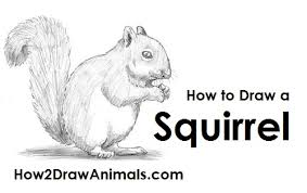 Small Picture How to Draw a Squirrel