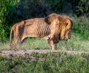 Akibat Sering Diambil Gadingnya, Gajah Afrika Berevolusi Tidak Memiliki Gading