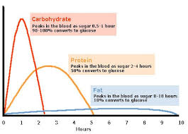 Food Conversion To Blood Glucose Blood Glucose Levels