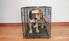 Midwest Icrate Size Breed Chart Midwest Icrate Folding Metal Dog Crate Review 2018