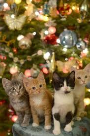 Christmas Gifts For Cats  YouTubeChristmas Gifts Cats