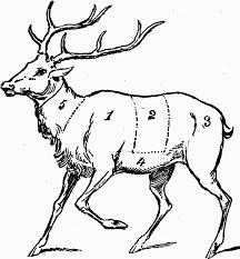 Deer Meat Chart Cutting Up Deer Chart