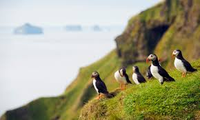 what s the difference between a penguin and a puffin howstuffworks