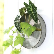 galvanized wall planter canada best planters rank style threshold inch round galvanized wall planter magnolia main