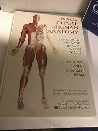 Wall Chart Of Human Anatomy The Anatomical Chart 1993 Edition Wall Chart Of Human