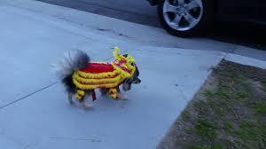 DOG DRAGON! - Happy Chinese New Year! (Lunar New Year ...