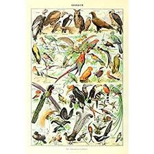 Amazon Com Retro Vintage Poster Print Art Colorful Birds