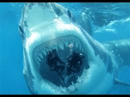megalodon shark sightings 2015. Exellent Megalodon REAL MEGALODON CAUGHT ON CAMERA 2015 EVIDENCE  Crazy Daily  Content For Megalodon Shark Sightings 2015 S