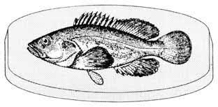 Resultado de imagen de figura del pescado