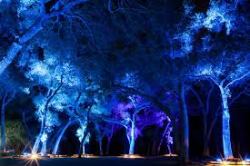 Enchanted Forest Of Lights Descanso
