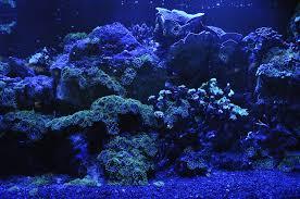 Meerwasseraquarium Beleuchtung