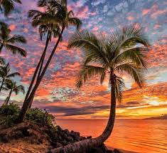 Beaches Palm Trees Tumblr Beach Nature Ocean Wallpaper Gallery for