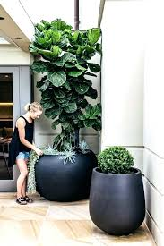 indoor plant holders tall plant pots for indoor plants giant matte black planters dramatic look for indoor plant