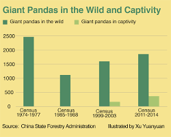 Giant Panda Population Chart Panda Population By Year Related Keywords Suggestions