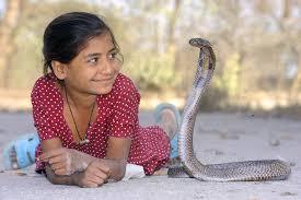 少女とコブラ