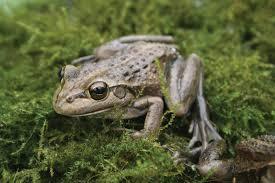 garden frogs. Contemporary Garden Frogfriendly Garden On Frogs O