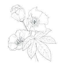 Botany Coloring Pages Botany Coloring Pages Beneficial Dandelion