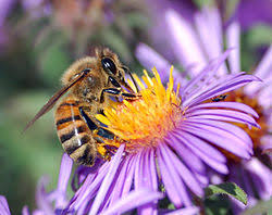 bee, pollination, nature
