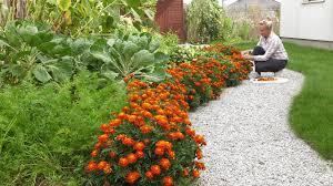 Uprawa współrzędna warzyw. Sąsiedztwo wysiewanych i sadzonych roślin w  warzywniku. - YouTube