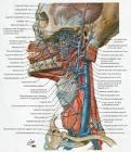 vena maxillaris